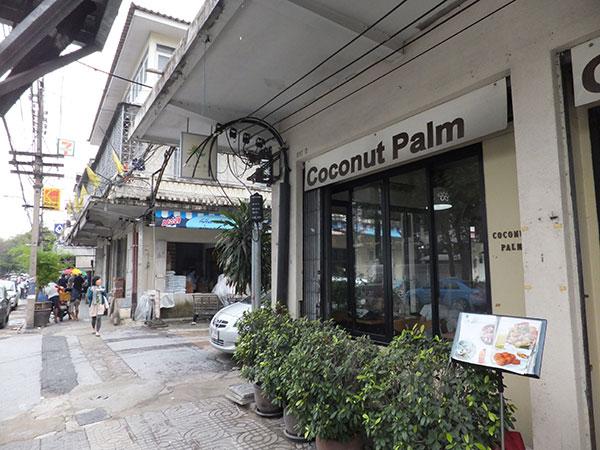 曲がり角にあるcoconut palm