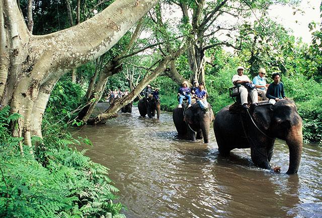チェンマイで楽しめる象トレッキング 画像:タイ国政府観光庁
