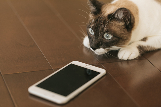 cat9V9A9021_TP_V